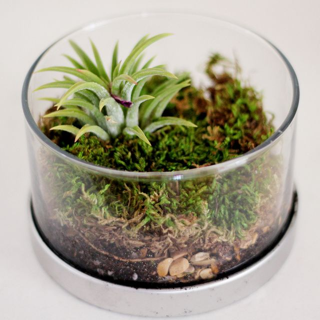 17 best images about terrarium on pinterest miniature plants for terrariums and mini gardens. Black Bedroom Furniture Sets. Home Design Ideas