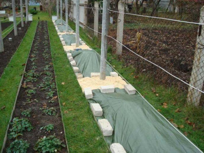 Перед началом зимы кусты винограда «Валек» укрывают, а после того как морозы пройдут, укрытие следует снять