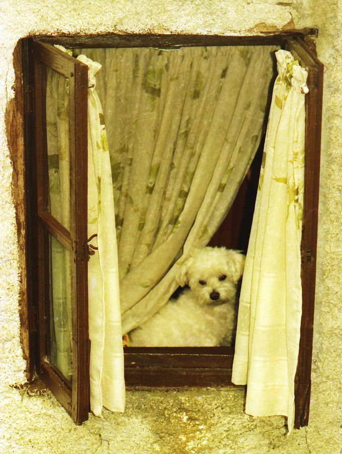 Puppy at an old crambling window by Francesco Cetta on 500px