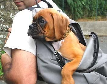 This is probably the last time he'll fit in that backpack...lol