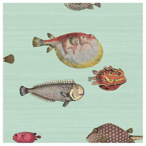 wallpaper / Cole & Son - Fornasetti II Acquario Wallpaper - Pale Blue