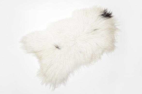 Black Sheep (white light) Icelandic Sheepskin 05
