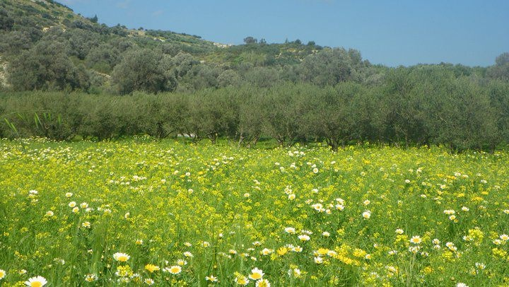 TRAVEL'IN GREECE | Spring in #Crete, #Greece, #travelingreece