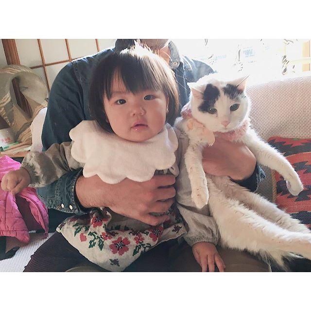 昨日のくーちゃんとムスメ😺👶 今年こそ眠っているカメラを練習するぞ📷 #愛猫#老猫#猫と赤ちゃん#赤ちゃんと猫#babyandcat#赤ちゃん#女の子#2月生まれ#生後11カ月#冬生まれ#親バカ#新米ママ#育児#ムスメ#コドモノ#ママリ#ig_kids#ig_kidsphoto#japan#baby#girl
