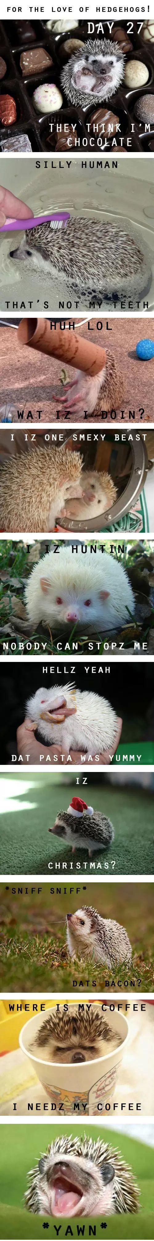 For The Love Of Hedgehogs! - LoL Champ