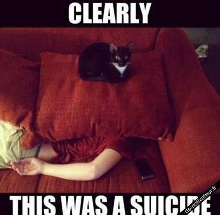Suicide ?