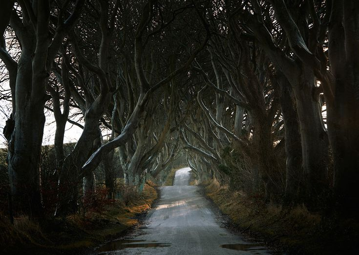 road-landscape-photography-andy-lee-7 The Dark Hedges, Northern Ireland
