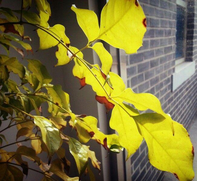 나뭇잎이 반사되어