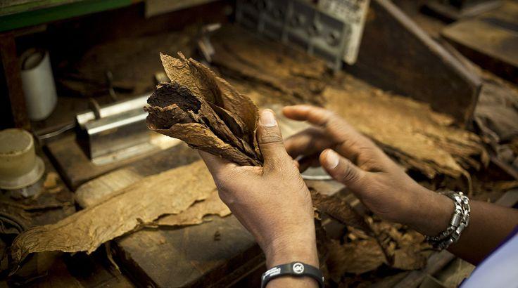 El mundo de la fabricación de los famosos habanos cubanos