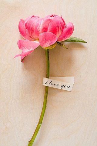♥♥ Pink flower...
