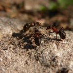 You can drive ants off your lawn without harsh chemicals. Do you have a problem with ants in your lawn? If you do, getting rid of them with coffee is inexp