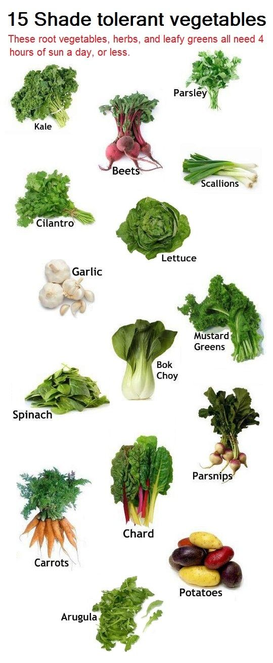 Got limited sun? These 15 vegetables only need 4 hours a day of direct light. 15 Shade Tolerant Vegetables: Utilize them in those shaded areas of the yard, and leave the sun for the tomatoes. :)