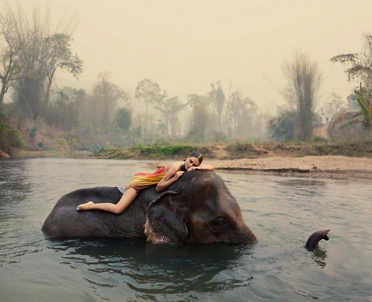 Swimming with elephants.