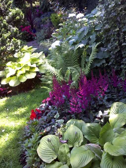 Shade garden, astilbes, hostas, ferns