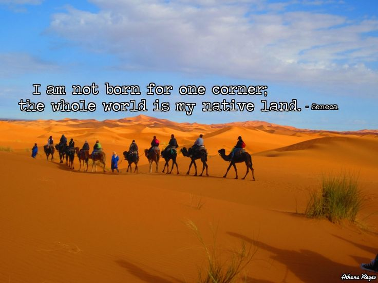 Just Added A Favorite Travel Quote To A Photo I Took While Riding A Camel Through The Sahara