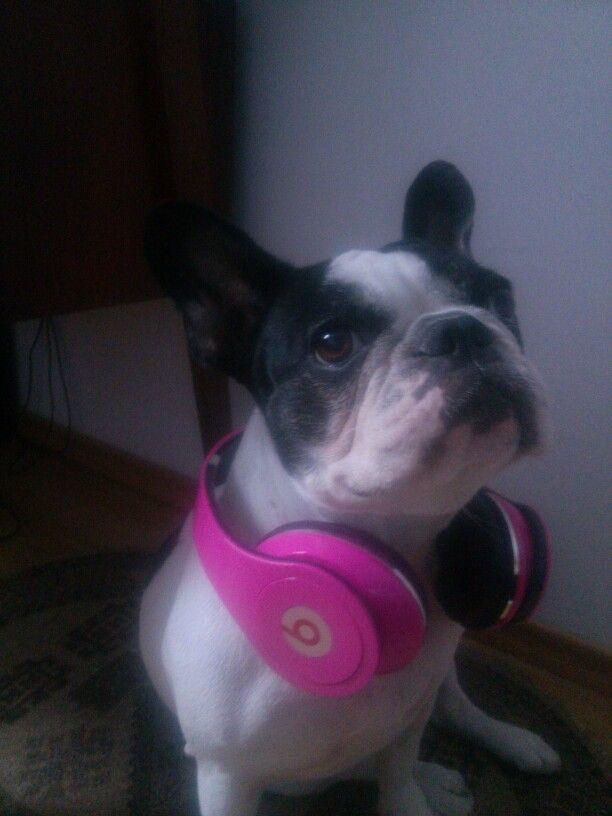 #BeatsFrenchie