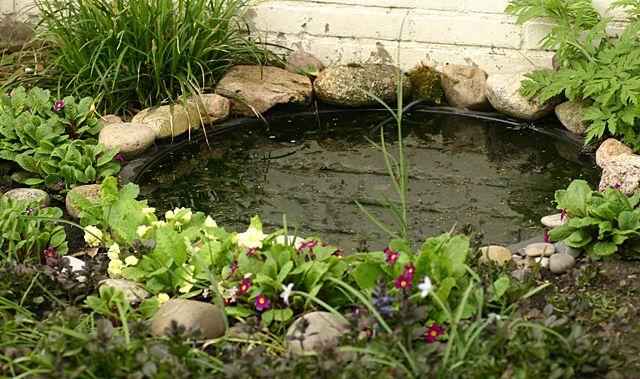 Mini vijvertje, vroege voorjaar