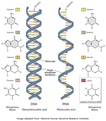 263 best DNA and Genetics images on Pinterest Quantum physics - new molecular blueprint definition