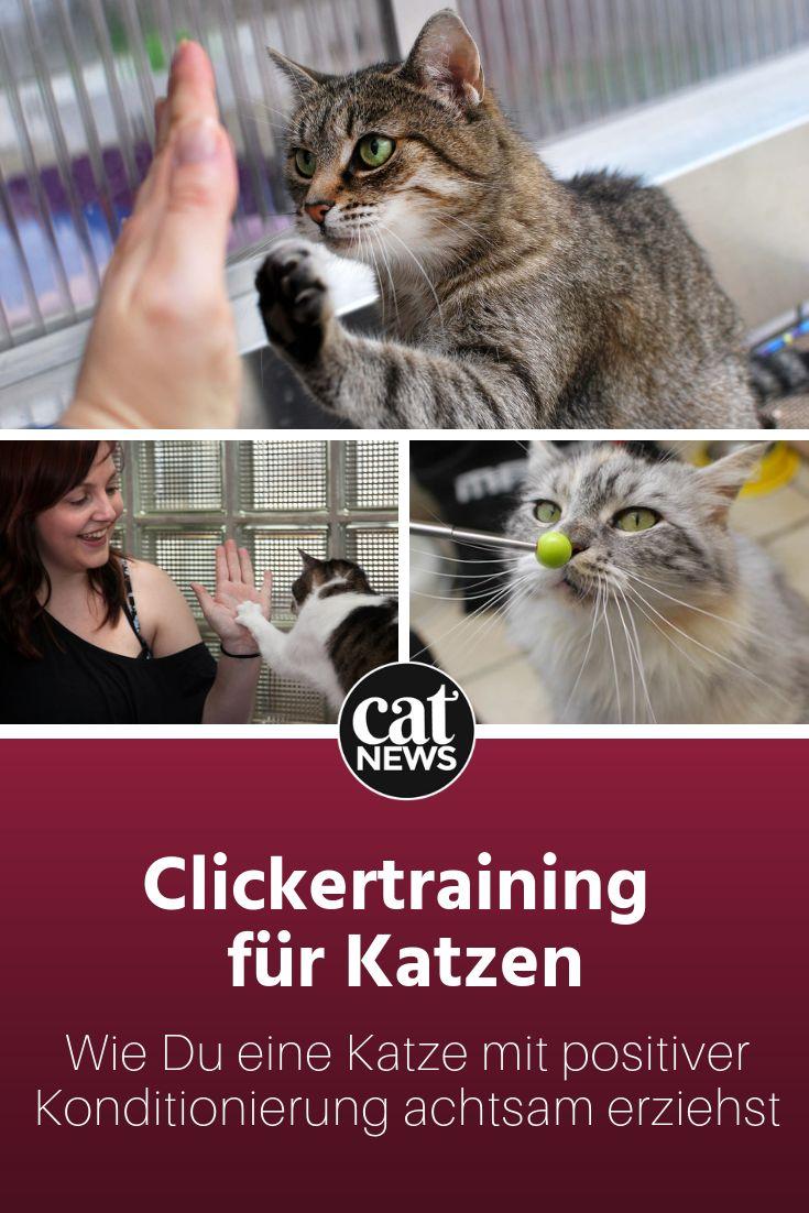 Katzen erziehen mit Clickertraining: Was ein Profi für den Start empfiehlt – Cat-News.net Katzenmagazin