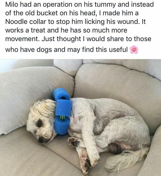 Pin By Linda Langton On Dogs Puppies Dogs Dog Hacks Animals Pets