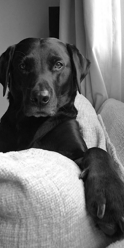 #BlackDog #BlackandWhite Photo
