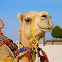 Stopoverpakket Australie incl. 4 stopover Dubai  Bij dit stopoverpakket zijn de intercontinentale vluchten uw verblijf in Dubai en de eerste 2 nachten in Sydney alvast geregeld. In Dubai verblijft u in het 4 Arabian Courtyard Hotel met centrale ligging in Dubai City.  EUR 0.00  Meer informatie  http://dubaiservice.eu http://ift.tt/1U3o6T7 #Dubai #arabischeemiraten