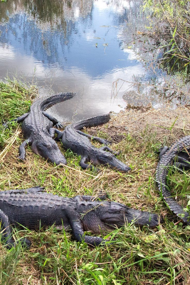 15 Best U S National Parks For Wildlife Watching National Parks Blog Everglades National Park Florida National Parks Everglades National Park