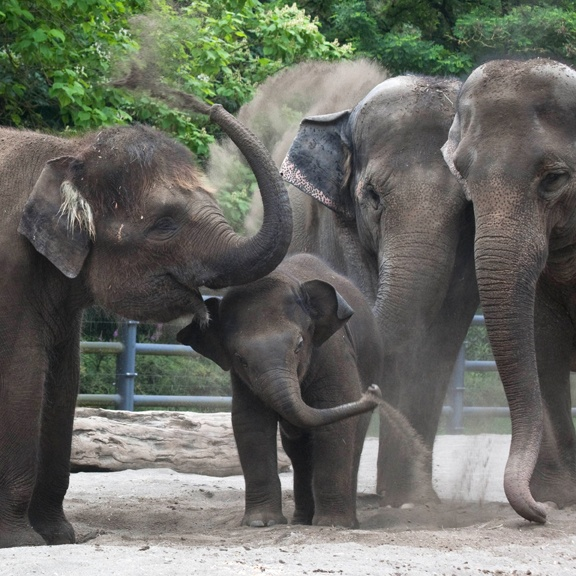 video portland zoo - 576×576