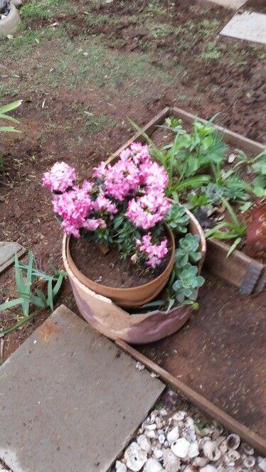 Pinkblom