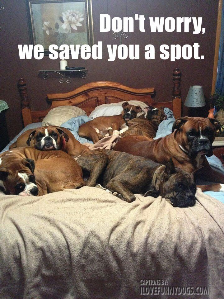 bed full of dogs
