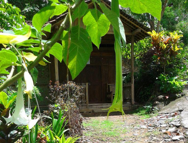 Sebuah rumah di objek wisata Kalibiru yang juga disewakan. Rumah sederhana yang menggambarkan bentuk rumah warga Kokap yang banyak berada di