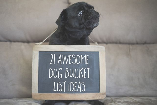 21 Awesome Dog Bucket List Ideas for Your Pug http://www.thepugdiary.com/21-awesome-dog-bucket-list-ideas-for-your-pug/