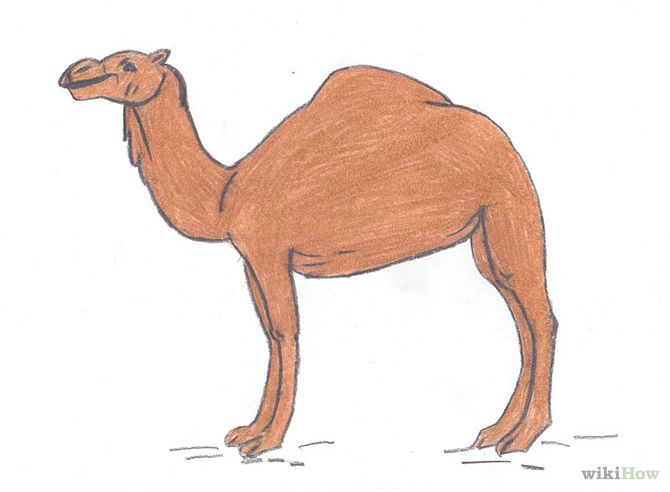 How to Draw Desert Animals: 8 Steps - wikiHow