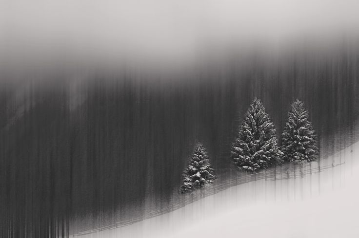 III - Abstract black and white forest in the winter