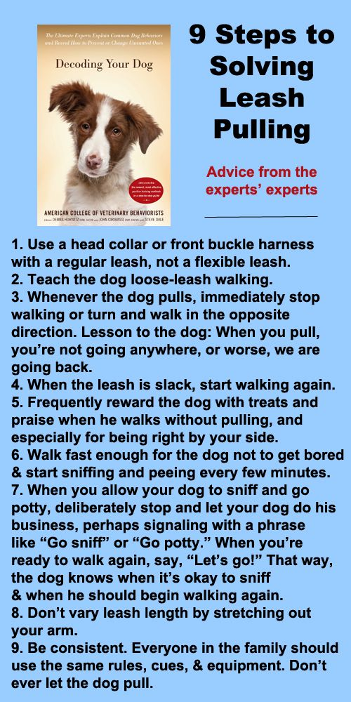 9 steps to solving leash pulling