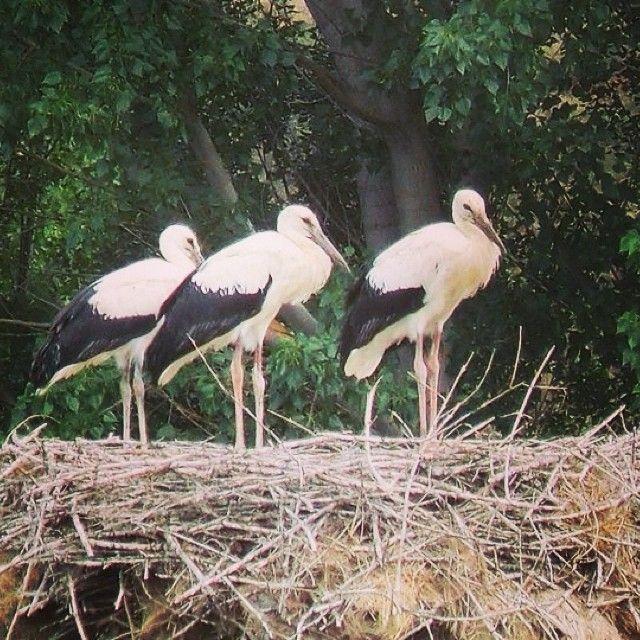 #cegonhas #gimonde #bragança #trás-os-montes #turismo #aves #portugal #nortedeportugal #fauna #montesinho #amontesinho