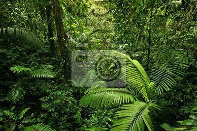 Wall Mural Dense Tropical Rain Forest