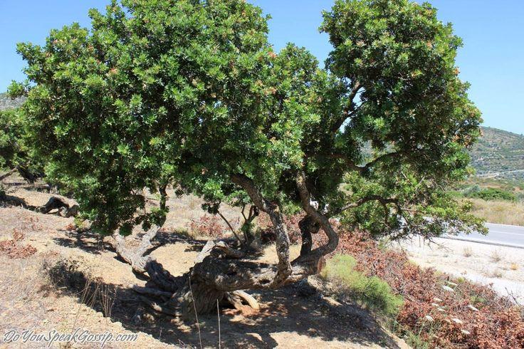 Day 3 in Chios – Pirgi, Mesta, Emporios, Komi | Do You Speak Gossip?