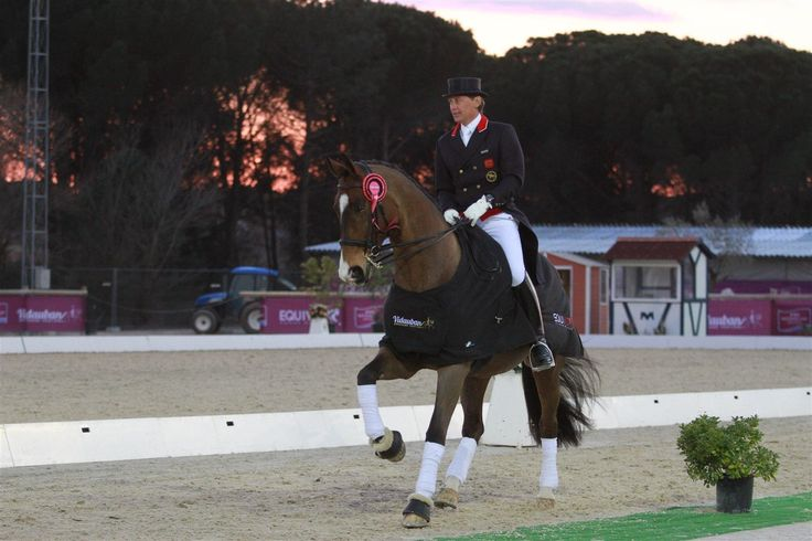 Emile Faurie is one of the Jacksons Professional Riders - Emile has represented Britain at two #Olympic Games, three World #Equestrian Games and three European #Championships. #horses #riders #professional