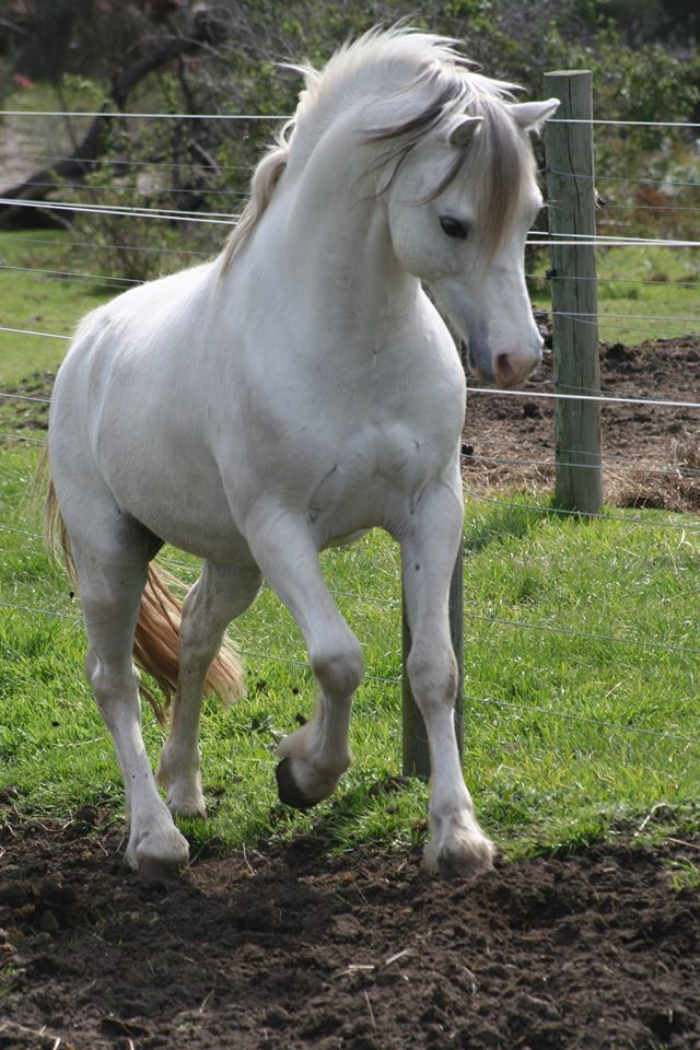 Top 10 Of Popular Horse Breeds in The World [No. 7 Awesome]   #BreathOfTheWild #HorseBreeds #HorseBreedsChart #HorseBreedsPercheron #HorseBreeding #HorseRiding #HorseLove #HorseBackRiding