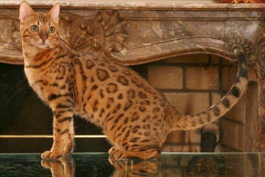 Kotki w paski i kropki