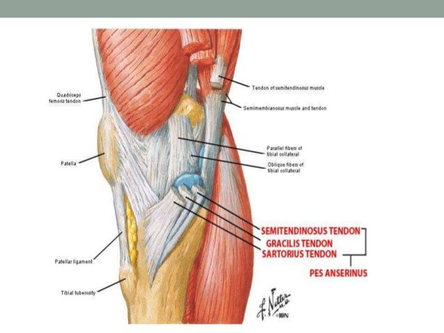 Anatomy Of The Knee Akbaeenw