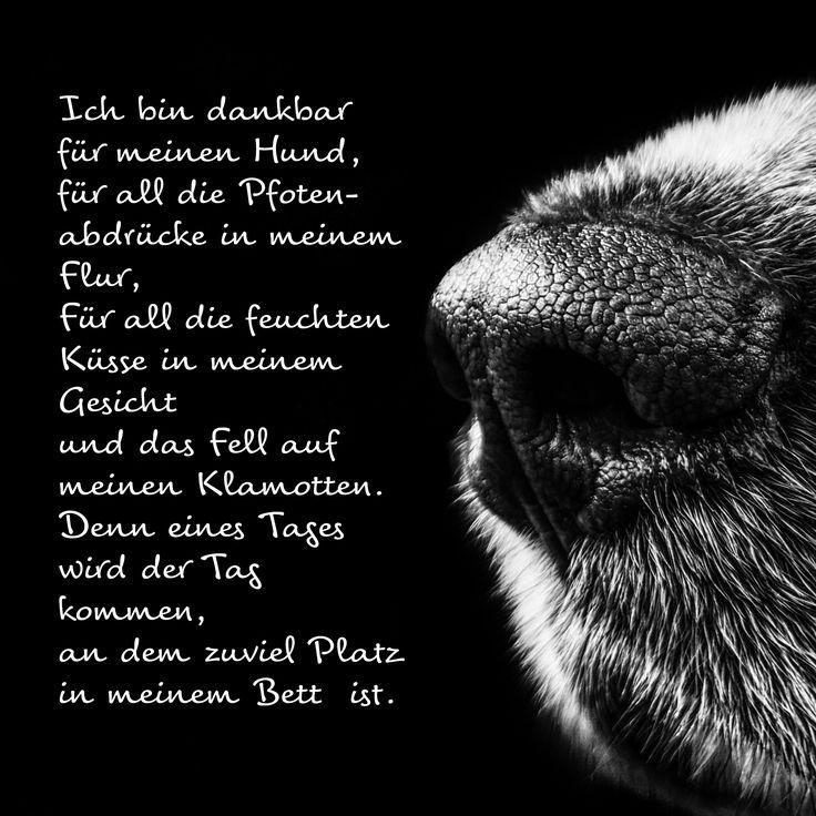 Ich bin dankbar ... #Trauergedicht #ANUBIS #Tierbestattungen