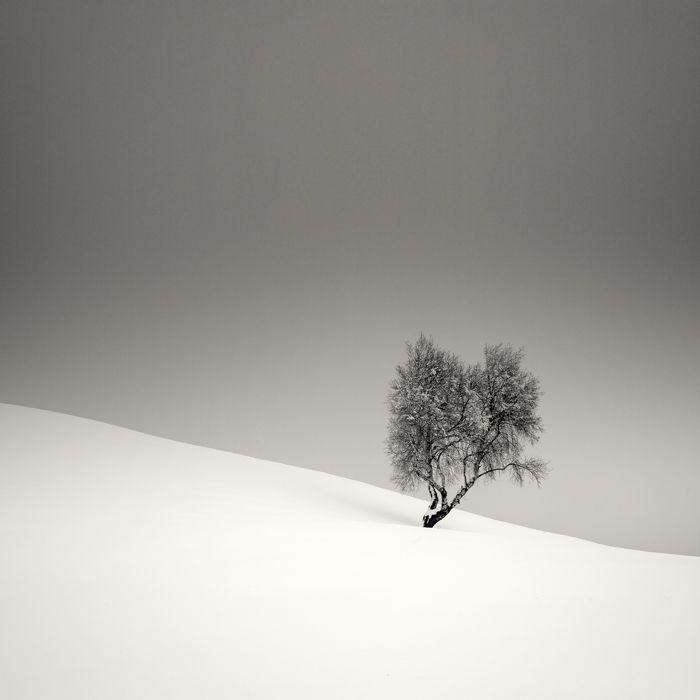 Tree I by Pierre Pellegrini
