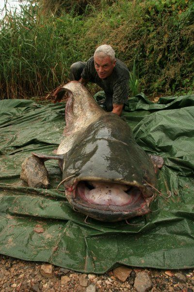 """Jeremy Wade with a wels catfish in """"River Monsters"""""""