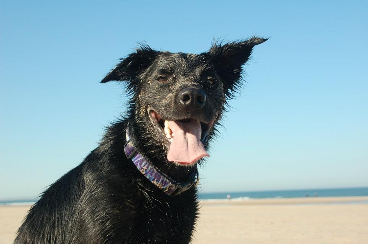 Happiness is a dog on a beach
