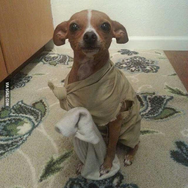 Master has given Dobby a sock. Dobby is free! (Happy Halloween)