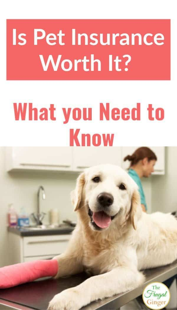 Is Pet Insurance Worth The Money Saving Money Money Saving
