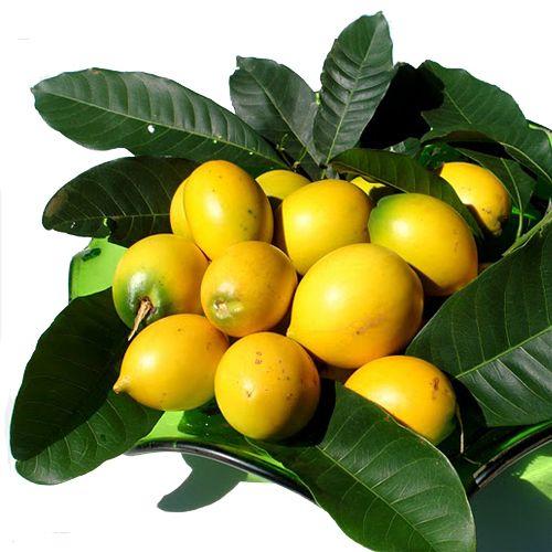 ABIU AMARELO Nome popular: abieiro.O abiu é fruto do abieiro, uma árvore da família das Sapotáceas, a mesma família do quixaxá, tutiribá, sapoti, etc. Originária do Peru acha-se perfeitamente aclimatada em nosso país. Combate às afecções das vias respiratórias. É rica em Cálcio, Fósforo, Energia, Proteína, Gordura, Carboidrato.  Árvore de até 10 m de altura, tronco de casca áspera, copa densa e esgalhada. Folhas lisas e brilhantes. Flor de coloração amarela avermelhada...