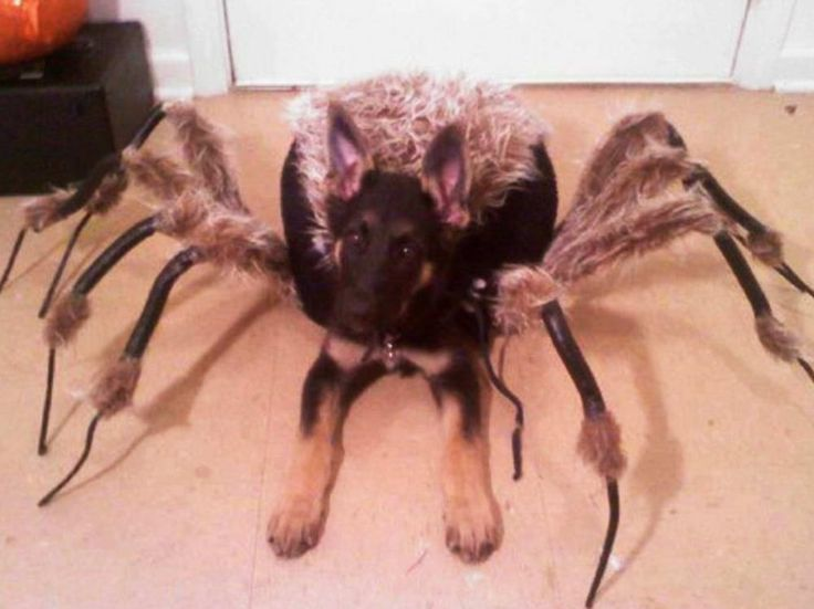 17 Best ideas about Dog Halloween Costumes on Pinterest